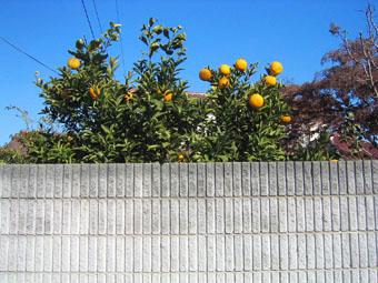 20060109-orange.jpg