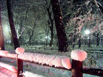 20060125-inokasira.jpg