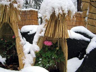 20060127-SNOW06.jpg