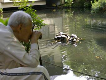 20060620-turtle.jpg