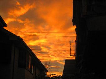 20060815-orange.jpg