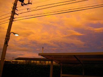 20060828-MURASAKI.jpg