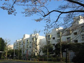 20070327-hanami02.jpg