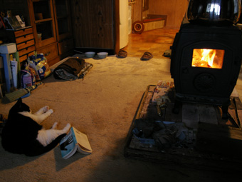 20080205-fire_and_cat.jpg