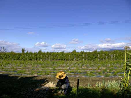 20090119-nkk36.jpg